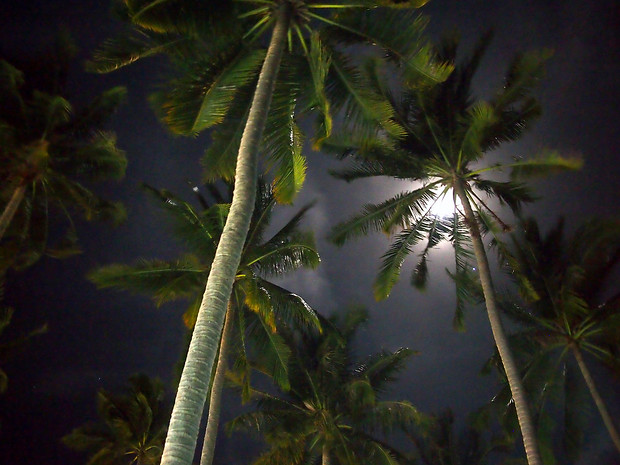 Palm trees at night Mui Ne Vietnam