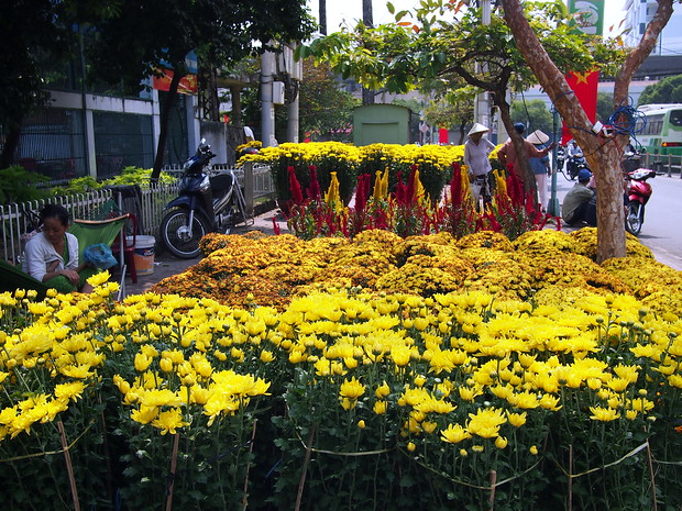 Flowers on sale for lunar new year in saigon