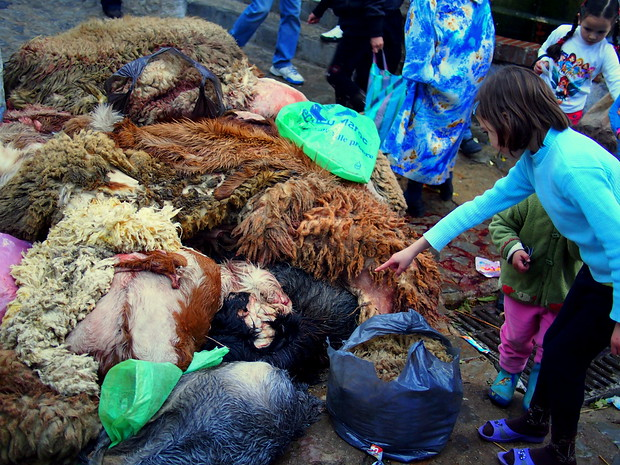 Sheep skins on the streets in Morocco during the Feast of Sacrifice