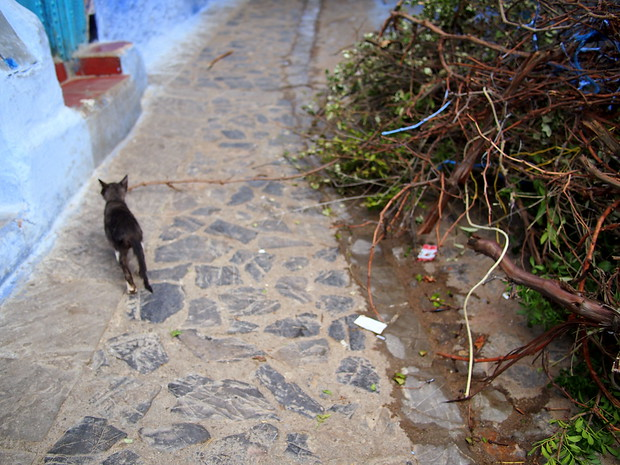 A kitten outside the furn in Chefchaouen