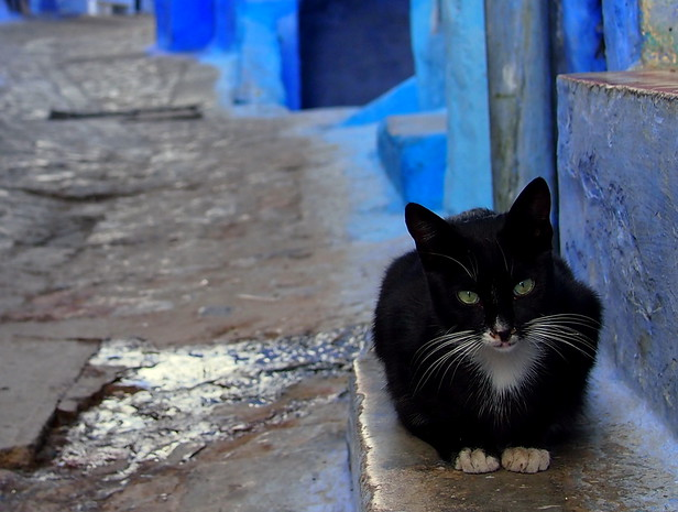 Cat sleeping the day away in Chefchaouen