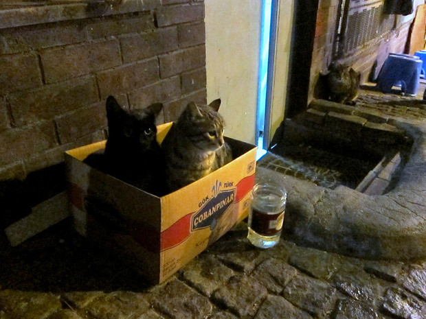 Kepab cats in a box, Istanbul