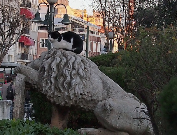 Cats in Sultanahmet