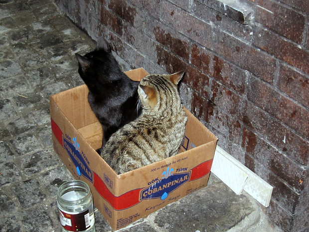 Kepab cats in a box, Istanbul, Turkey