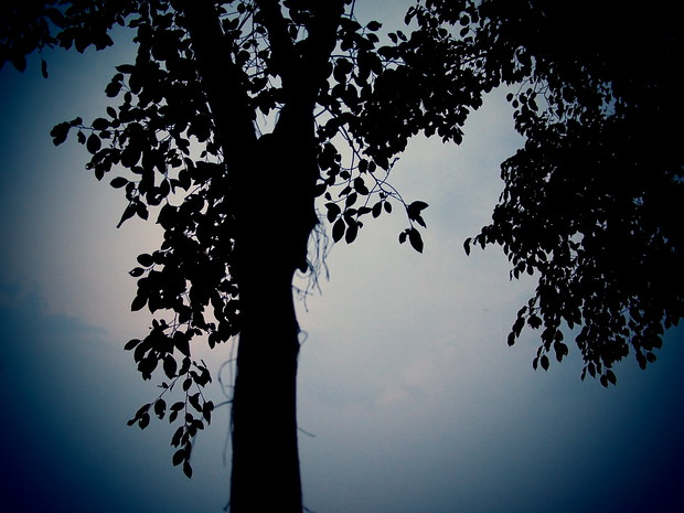 A tree at dusk, Chiang Mai, Thailand