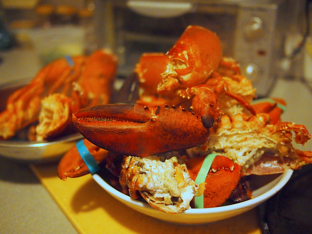 Lobster claws and head after cooking for 20 minutes