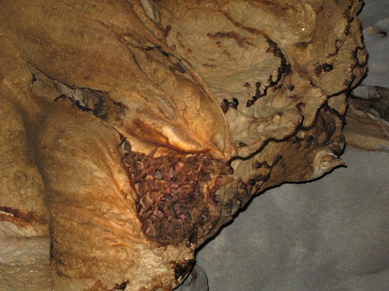 bats in subterranean river, puerto princessa