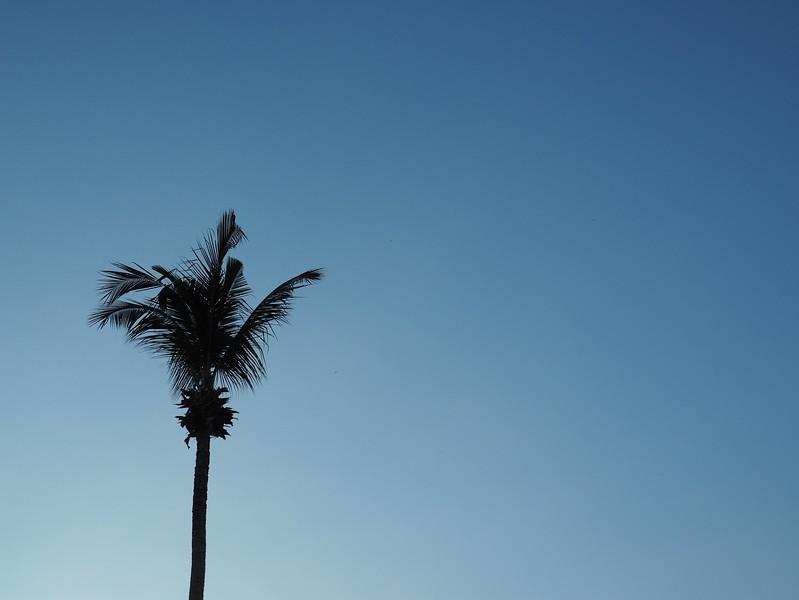palm tree thailand